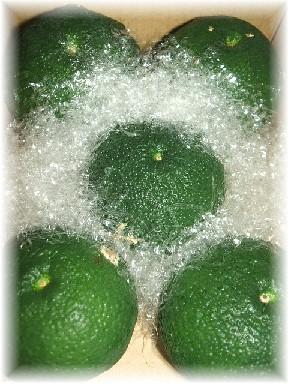 青柚子-1