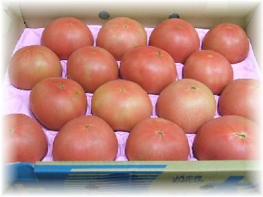 高冷地トマト