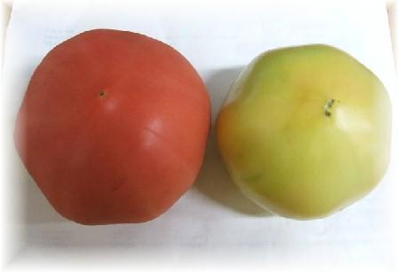 トマト-3