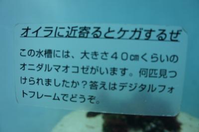 DSC00091_convert_20120515151609.jpg