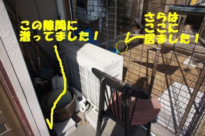 DSC08920_convert_20111102104820.jpg
