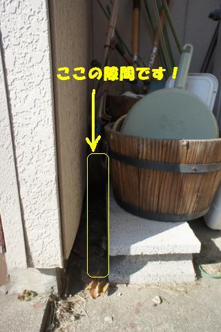 DSC08923_convert_20111102104839.jpg