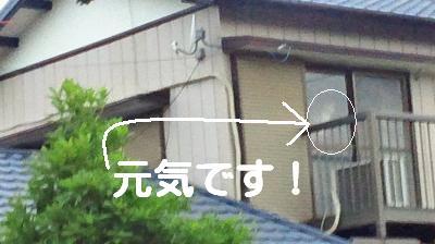 NEC_0002_convert_20120704131235.jpg