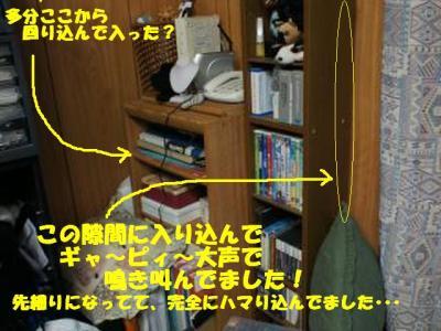 kako-6MFMhM0AnfV6YTfy_convert_20111202133807.jpg