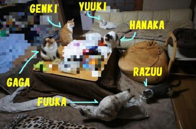 kako-onANyyaeTbqjUdPO_convert_20111214134913.jpg
