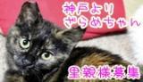 zaraboshu-banner_convert_20120403162818.jpg