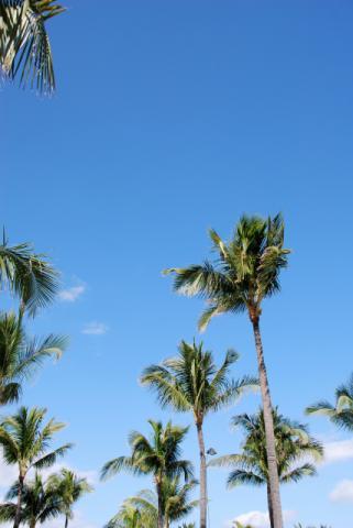 やしの木と青空