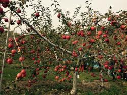 リンゴ狩り①2014.11.20