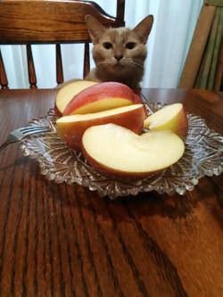 レオと木村さんのリンゴ2014.