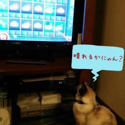 マーブルと天気予報2014.11.13
