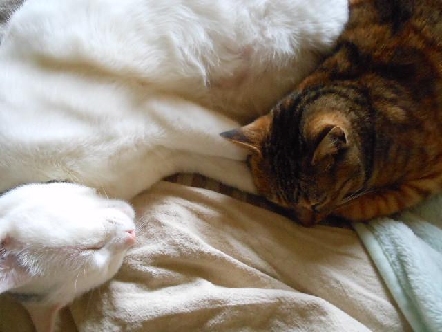 寝ていたオフィシナリスとアピアナ