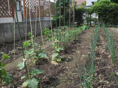 2010畑