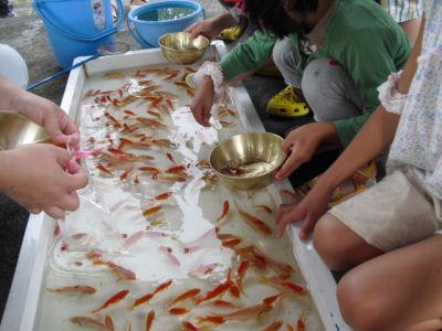 小出沼2010金魚
