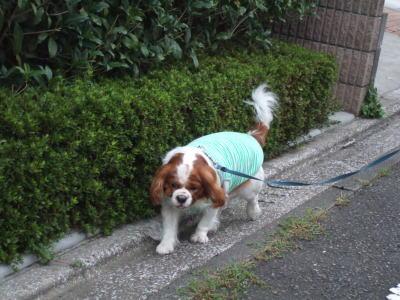 お散歩 4