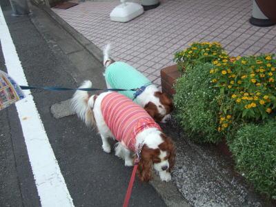 お散歩 2