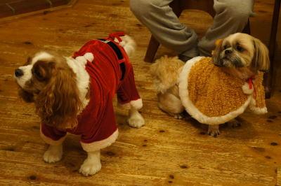 クリスマスコスプレ 2
