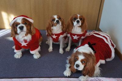 クリスマス 2011  1
