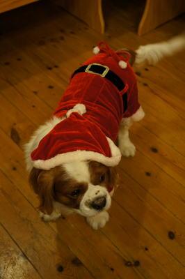 クリスマス 2011  4