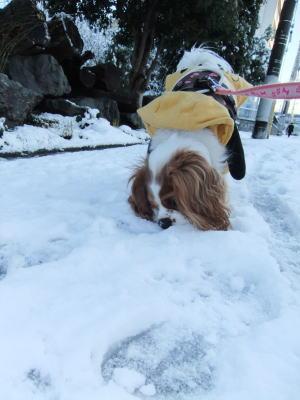 2012 雪 3