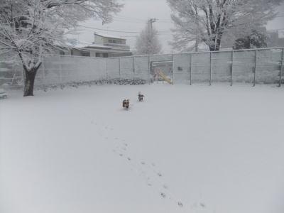 2月雪 6