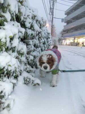 2月雪 4