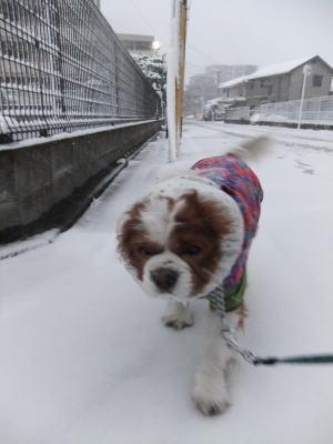 2月雪 5