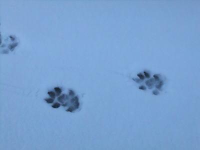 2月雪 3
