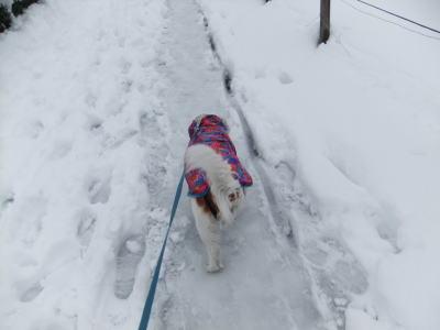 2月雪 12