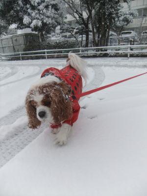 2月雪 8