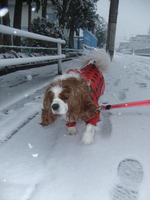 2月雪 9