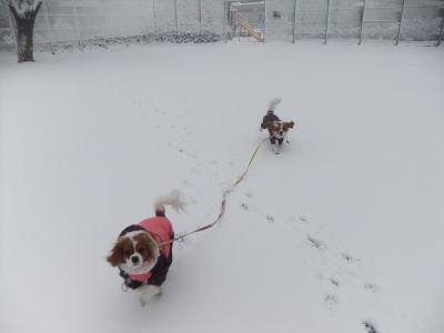 2月雪 7