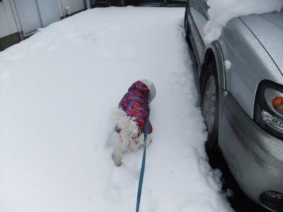 2月雪 17