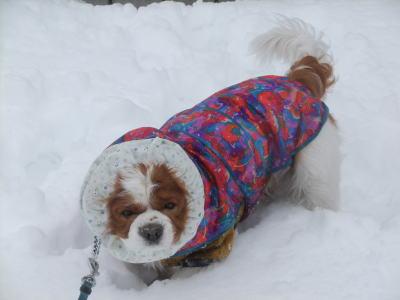 2月雪 15
