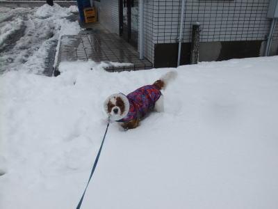 2月雪 14