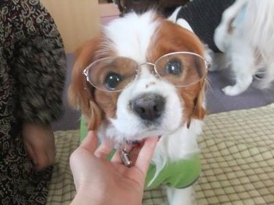 眼鏡かけたのだ 4
