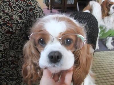 眼鏡かけたのだ 3