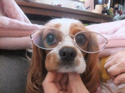 眼鏡かけたのだ 2