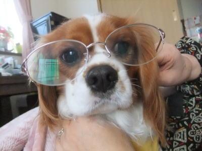 眼鏡かけたのだ 1
