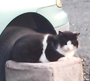 駐車場猫ジジ