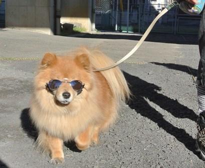 ワンズ卒業犬1