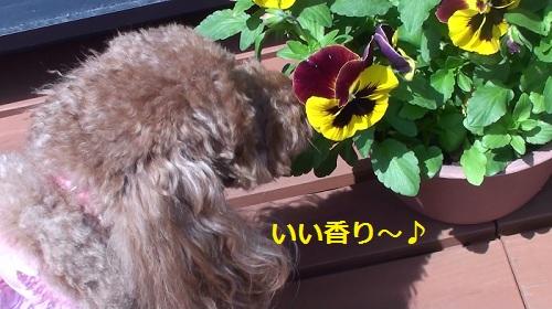 花の香りを匂っているナナ姫