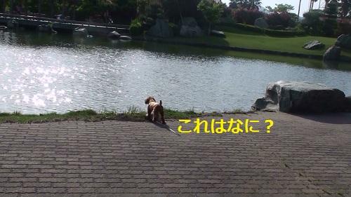 池のほとりにて