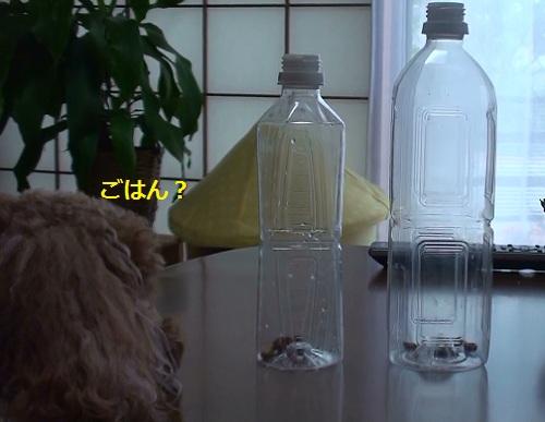 ペットボトルの中にフード