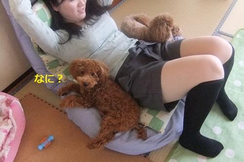 次女&ナナ姫&ハチ公