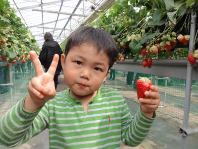 どう?大きいイチゴでしょ?