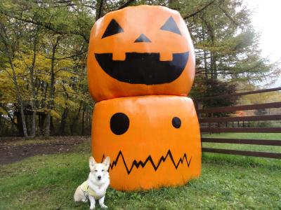 ハロウィンかぼちゃさんと♪