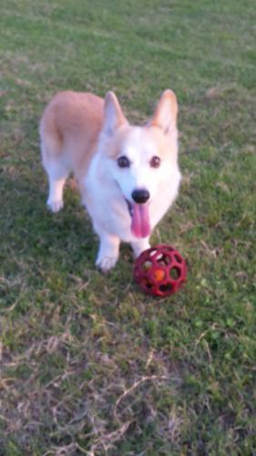 ボール、投げて!