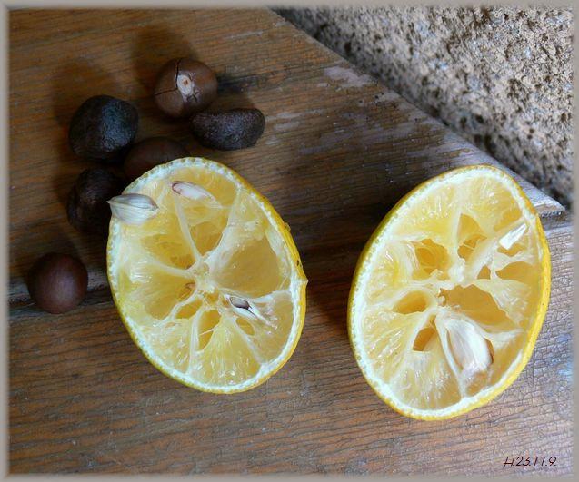 山茶花と酢橘の種