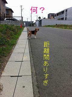 IMG_1358-1.jpg