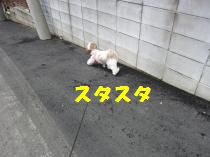 a270.jpg